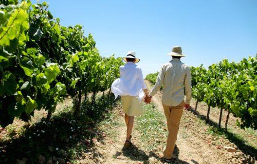 balade dans les rangs de vigne